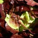 Beaverton Farmers Market Lettuce