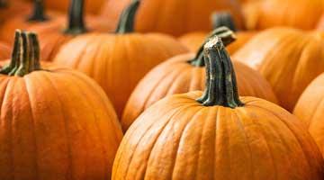 banner-pumpkins-shutterstock_155131223