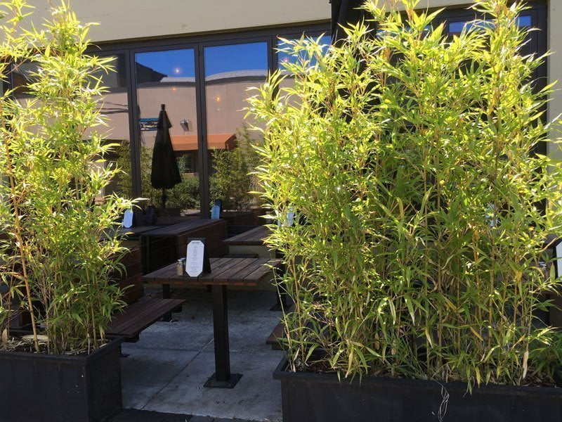 Casa Del Matador Portland outdoor dinin