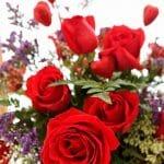 Roses flowers