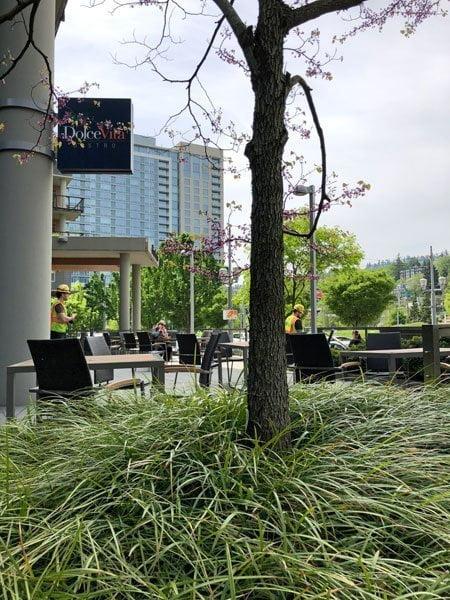 Dolce Vita Restaurant outdoor dining